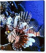 Lionfish 4 Canvas Print