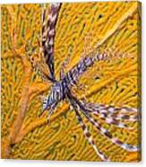 Lionfish Against Yellow Fan Coral Canvas Print