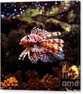 Lionfish Canvas Print