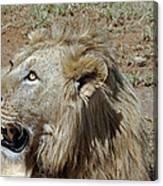 Lions Head Canvas Print