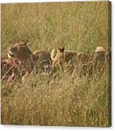 lions in the Maasai Mara park in kenya Canvas Print
