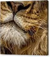 Lions Mouth 2 Canvas Print