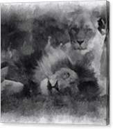 Lions Photo Art 01 Canvas Print