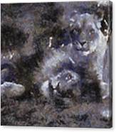 Lions Photo Art 02 Canvas Print
