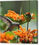 Lionstail Hummer Canvas Print