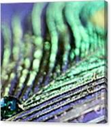 Liquid Peacock Canvas Print