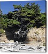 Den Of The Coastal Bigfoot Canvas Print