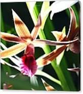 Lit Up Orchid Canvas Print
