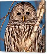 Lit Up Owl Canvas Print