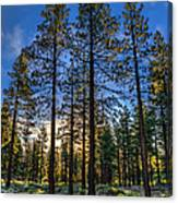 Lit Up Trees Canvas Print