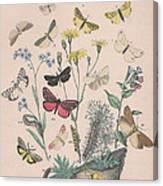 Lithosidae - Arctiidae Canvas Print