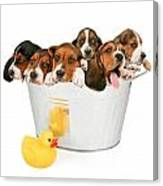 Litter Of Puppies In A Bathtub Canvas Print