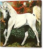 Little Arabian Canvas Print