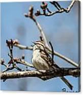 Little Bird Sings Canvas Print