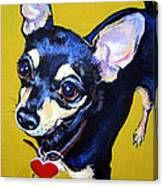 Little Bitty Chihuahua Canvas Print