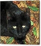 Little Black Cat In Fall Canvas Print