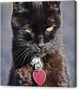 Little Black Kitty Canvas Print