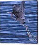 Little Blue Air Canvas Print