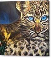 Little Blue Eyes Canvas Print