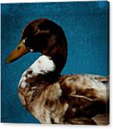 Little Brown Duck Canvas Print
