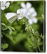 Little Butterfly Canvas Print