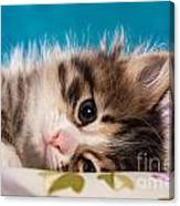 Little Cat Kitten Canvas Print