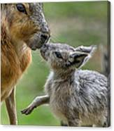 Little Cavy With Mother Canvas Print