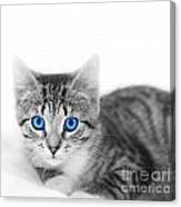 Little Cute Kitten. Space For Your Text Canvas Print