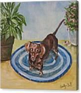 Little Dachshund Puppy Canvas Print