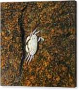 Little Dead Crab Under Water Canvas Print