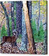 Little Deer In Autumn Canvas Print
