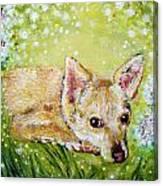 Little Dog Named Fern Canvas Print