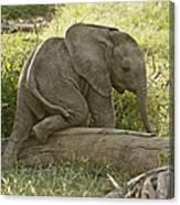 Little Elephant Big Log Canvas Print