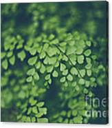 Little Green Leaves Canvas Print