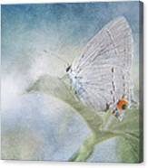 Little Grey Hairstreak Canvas Print