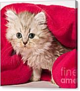 Little Kitten With Pink Blankie Canvas Print