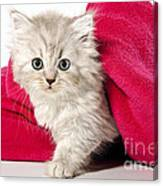 little Kitty Canvas Print