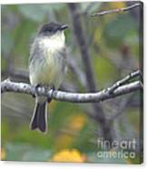 Little Lady Eastern Kingbird Canvas Print