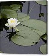 Little Lilly Canvas Print
