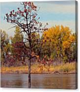 Little Oak II Canvas Print