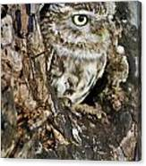 Little Owl In Hollow Tree Canvas Print