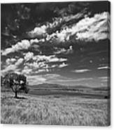 Little Prarie Big Sky - Black And White Canvas Print