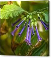Little Purple Bells Canvas Print
