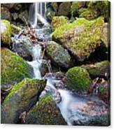 Little Waterfall In Marlay Park Canvas Print