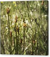 Little Weeds Canvas Print