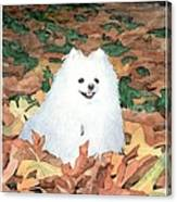 Little White Dog Watercolor Portrait Canvas Print