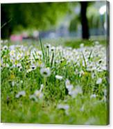 Little White Flowers II Canvas Print