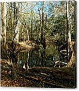 Little Withlacoochee River Canvas Print