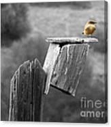 Little Yellow Bird Canvas Print