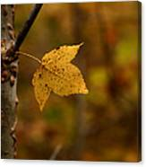 Little Yellow Leaf Canvas Print